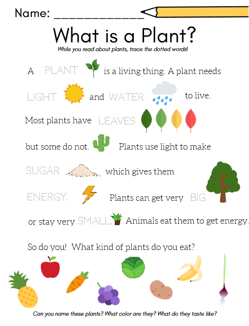 what is a plant